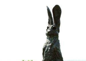 Hares-Look